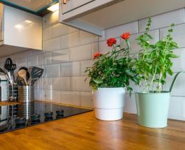 Лунный календарь пересадки комнатных растений на август 2021 года