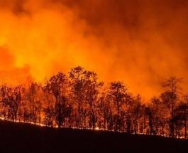 На Сардинии бушуют лесные пожары: власти просят помощи соседних стран