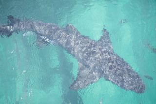 Видео плавающей рядом с двумя девушками акулы стало вирусным в сети