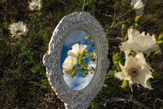 зеркало лежит в траве, отражение цветов