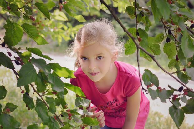 девочка ест шелковицу с дерева