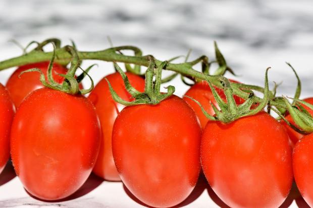 зкеленая ветка с помидорами