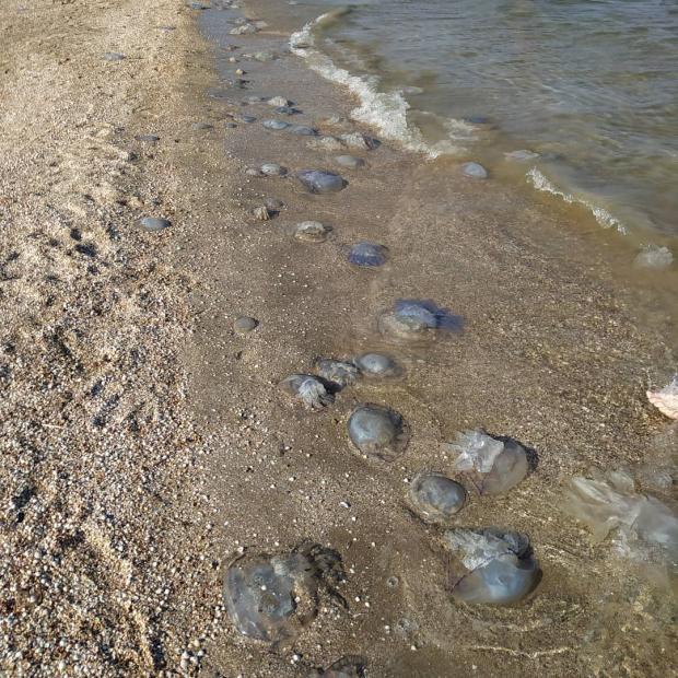 пляж с медузами