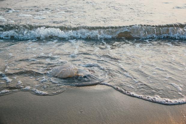 медуза в море
