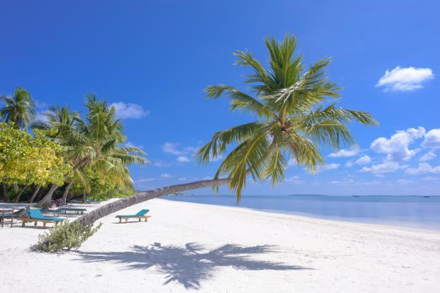 берег моря, пальма