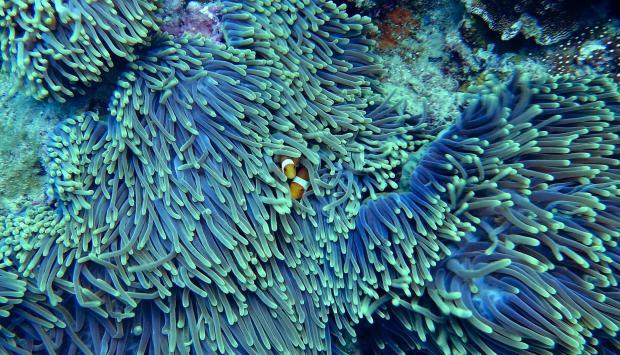 коралылы