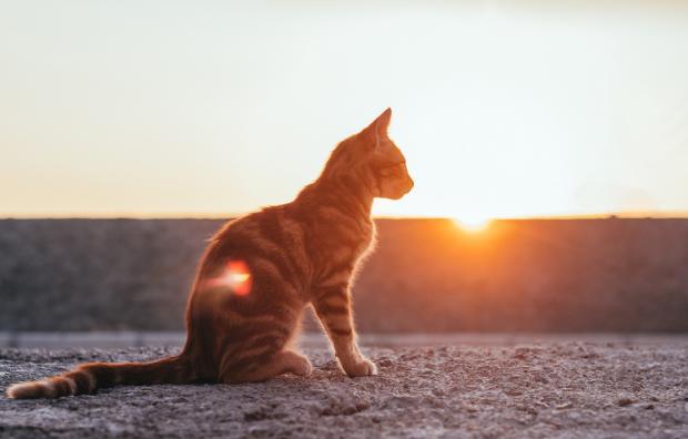 кошка в лучах заходящего солнца