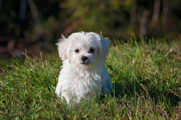 собачка на траве