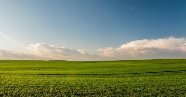 бескрайнее зеленое поле уходит к горизонту