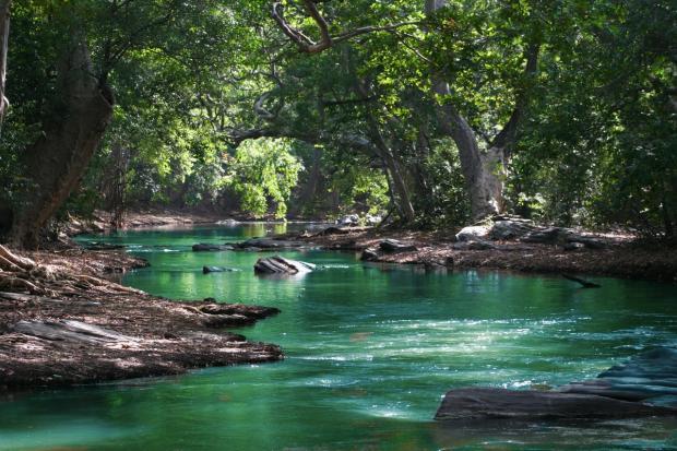река течет по лесу