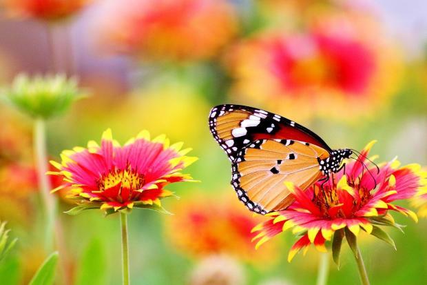 бабочка летает над красивыми яркими цветами