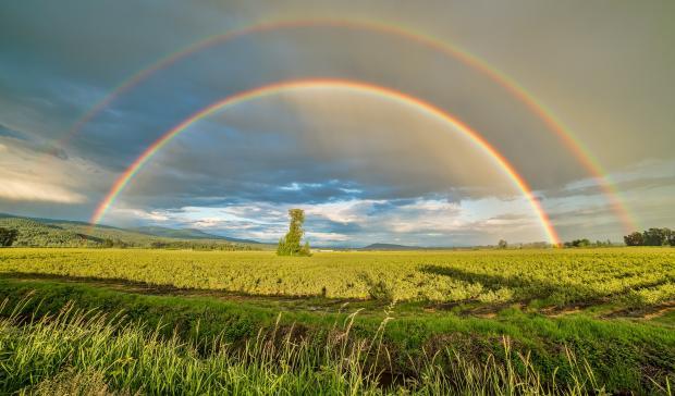 поле зеленое, голубое небо, радуга