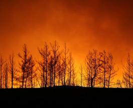 Лесные пожары в Турции: иностранных туристов эвакуируют из опасных регионов