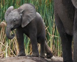 Видео слоненка, играющего с 7-летним мальчиком, стало вирусным в сети
