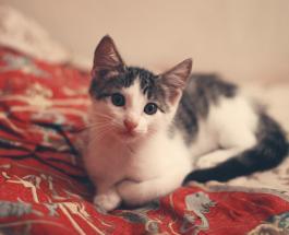 Почему кошка приходит в постель к хозяину: 6 возможных причин
