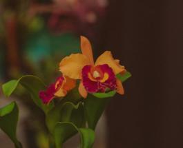 Цветочный тест: выбранная орхидея подскажет, в каком направлении менять жизнь