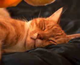 Милые фото спящих котов: 10 питомцев, уютно устроившихся в кровати хозяина