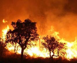 Более 40 человек погибли в результате сильных лесных пожаров в Алжире