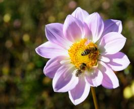 Удивительное видео: две пчелы пытаются сообща открыть бутылку со сладкой газировкой