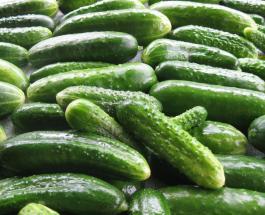 Почему огурцы становятся горькими и как сделать овощ вкусным и готовым к употреблению