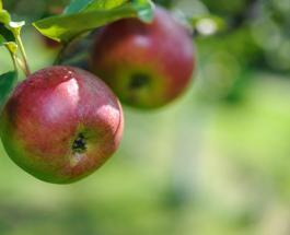 Яблочный Спас 2021: что нельзя и что можно делать в праздник 19 августа