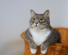 Кот спас жизнь 83-летней хозяйке, которая оказалась в опасной ситуации