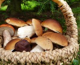 Чем полезны грибы: 9 причин регулярно добавлять их в свой рацион