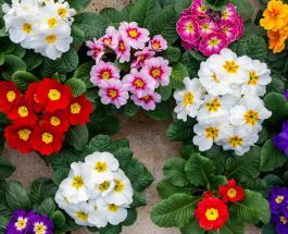 4 опасных растения, отбирающие энергию у обитателей дома