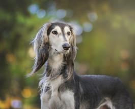 До и после: как меняется внешность собак разных пород после похода к грумеру