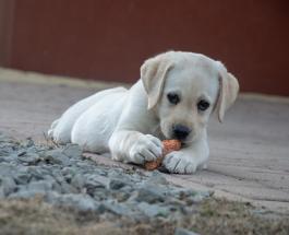 7 продуктов, опасных для здоровья вашей собаки