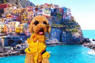 Забавное видео пса, катающегося по городу на самокате, умиляет пользователей сети
