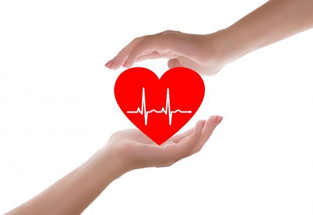 красное сердце с пульсом между рук