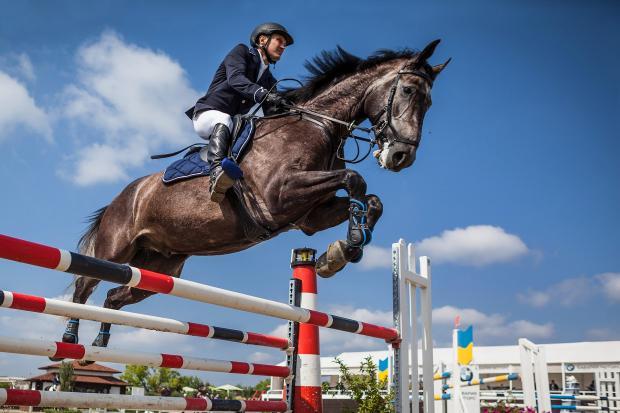 вороной конь с наездником перепрыгивает через барьер