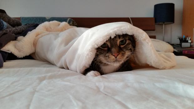 кошка на кровати под покрывалом