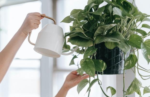 девушка поливает цветы из белого кувшина