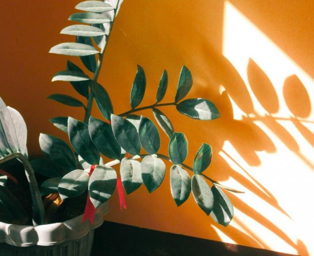 на желтой стене видна тень от комнатного растения
