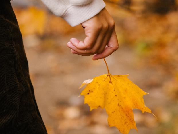 желтый кленовый лист в руке