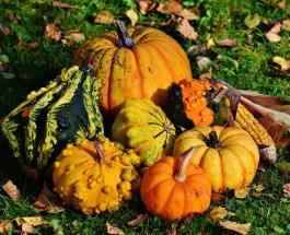 Здоровое питание осенью: какие продукты стоит добавить в ежедневный рацион