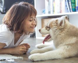 Ценные уроки, которым людям стоит поучиться у животных