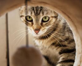 Кот, запертый в заброшенном доме на 52 дня, чудом выжил и ищет новую семью