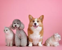 5 безопасных и действенных способов дать лекарство собаке или кошке