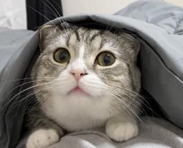 Самый популярный кот на YouTube: где живет и как выглядит рекордсмен Книги Гиннесса