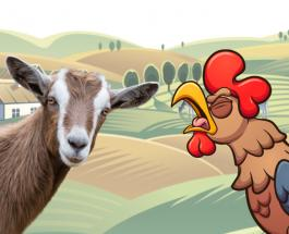 Коза и петух спасли курицу от нападения ястреба: удивительное видео с голландской фермы