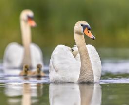 ТОП-10 птиц, которые представляют серьезную опасность для человека