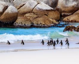 Рой пчел убил 63 пингвина в Южной Африке: ученые выясняют причины произошедшего