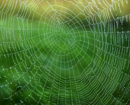 10 способов спастись от нашествия пауков в доме с наступлением осени