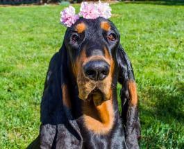 Собака с 30-сантиметровыми ушами попала в Книгу Гиннесса: фото четвероногого рекордсмена