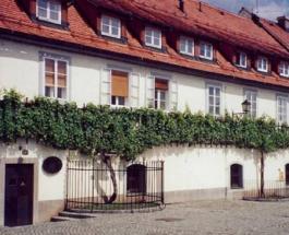 Самая старая виноградная лоза в мире: где находится растение с собственным музеем