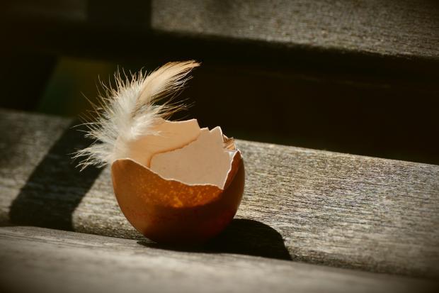 скорлупа одного яйца, перо