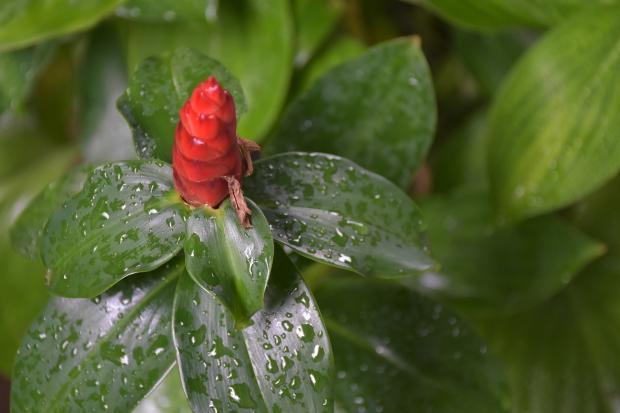 на цветочных листьях блестит вода